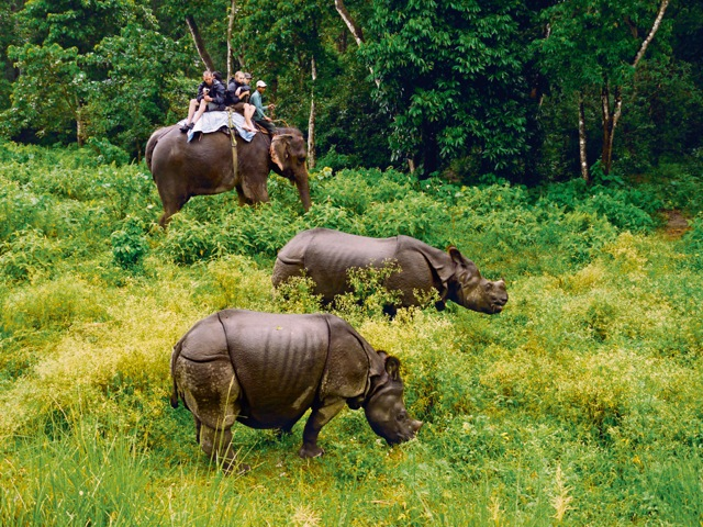 Wild Rhinoceros in Chitwan National Park