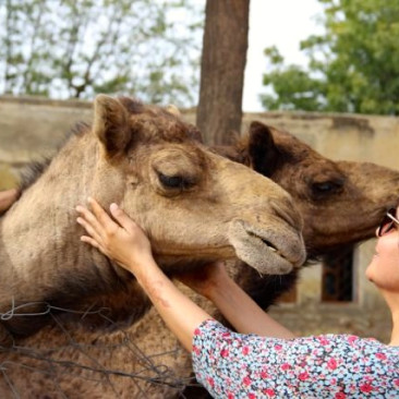 Canoodling Camel McToothy