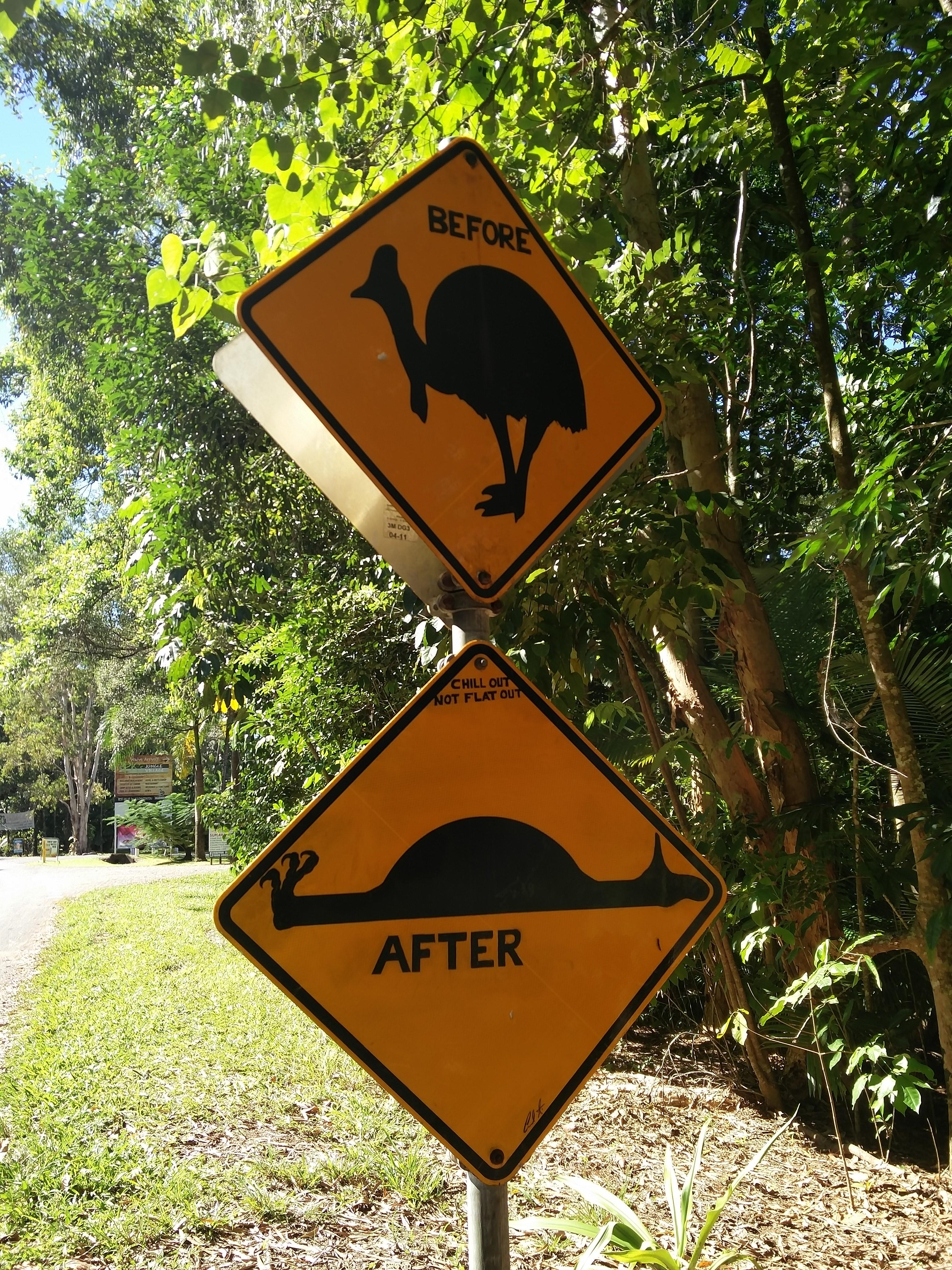 Cassowary Ahead